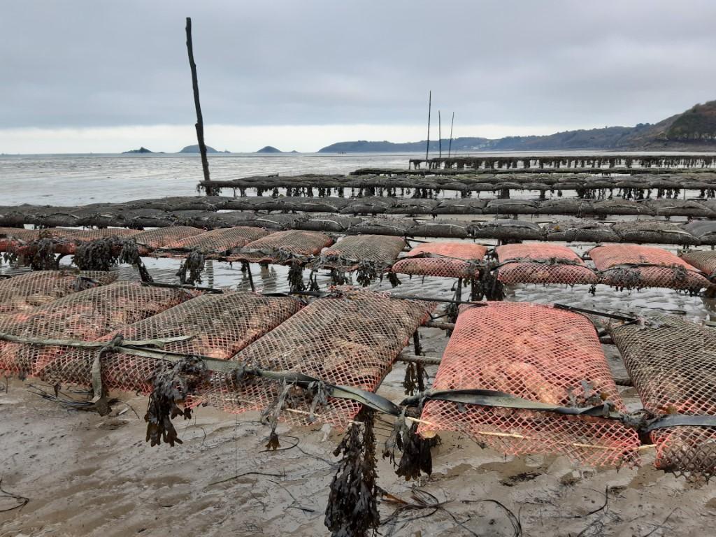Côte du Goëlo Bretagne rekken met oesters