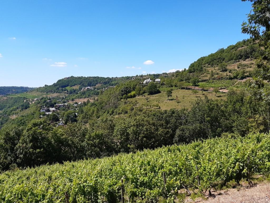 Le Créneau Aveyron dal met wijngaarden